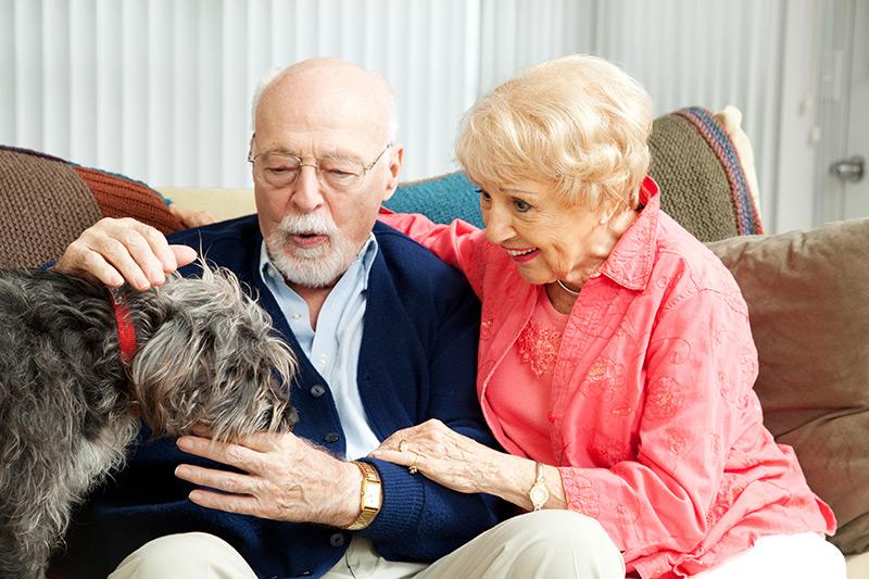 La médecine préventive et les animaux âgés