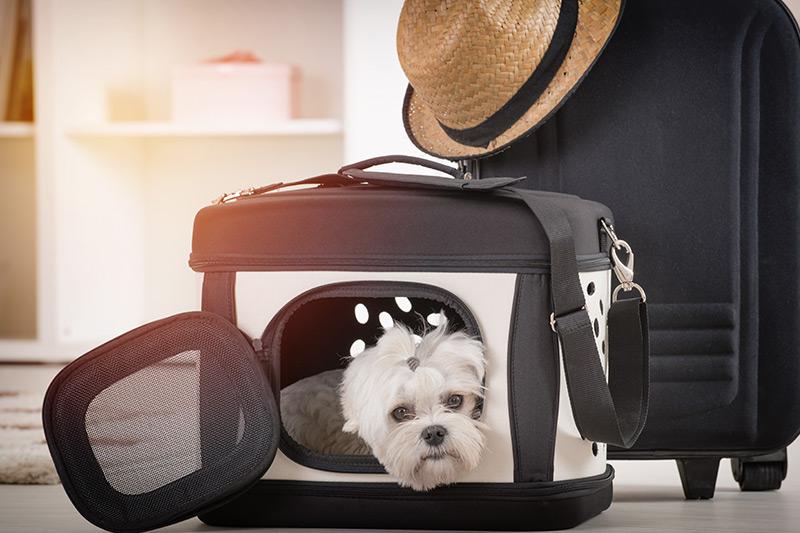 Guide pratique pour voyager avec votre animal